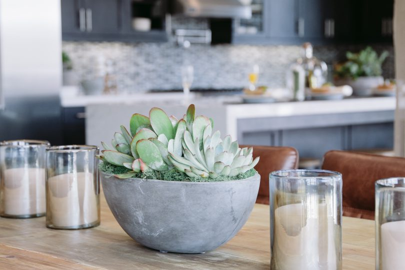 2016 Tips for adding house plants to decor | Brookfield Residential