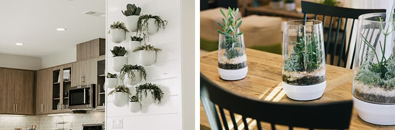 Spring refresh - terrariums and wall hangings