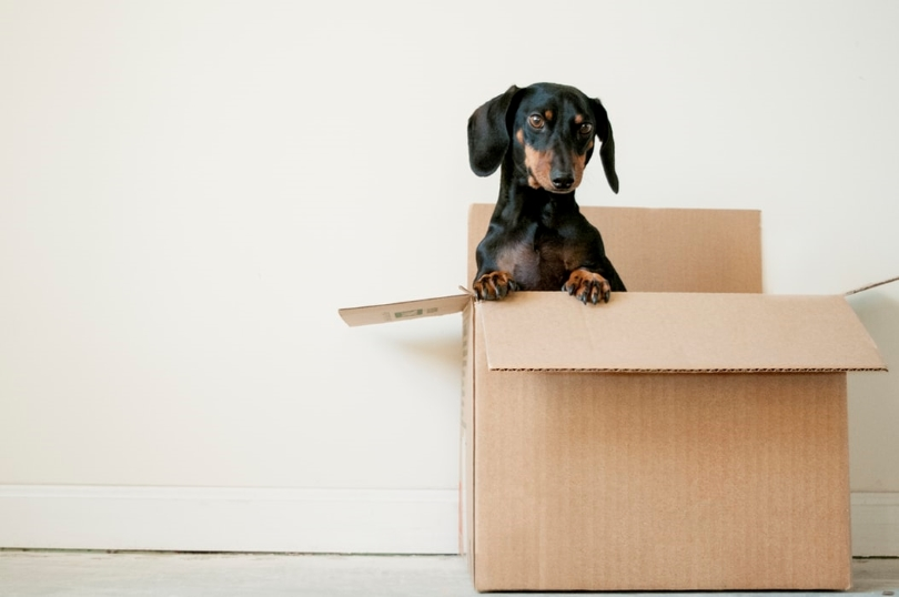 Cute Dog in a Moving Box | New Homes by Brookfield Residential