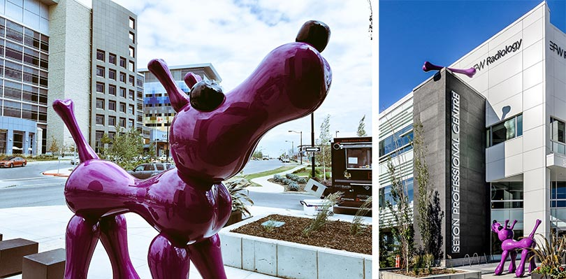 Boney, the nine-foot purple dog, brings unique excitement to the vibrant community of Seton in Calgary, Canada